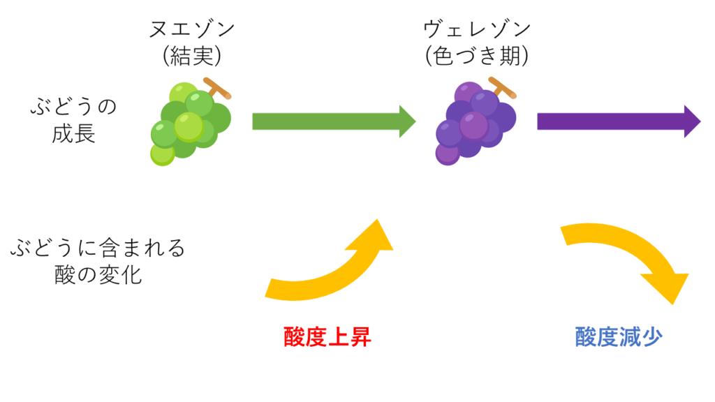 ぶどうの成長と酸の変化